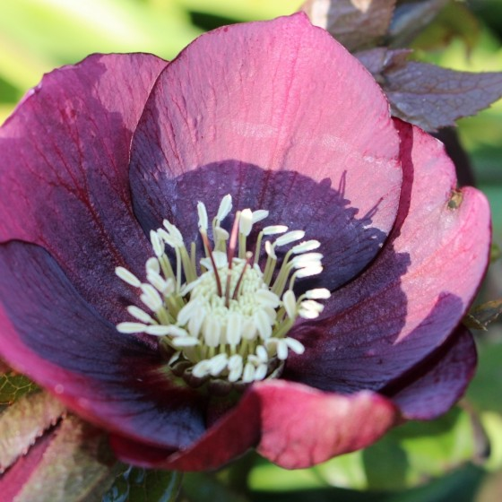 Summer in full bloom at our luxury lodges near Inverness