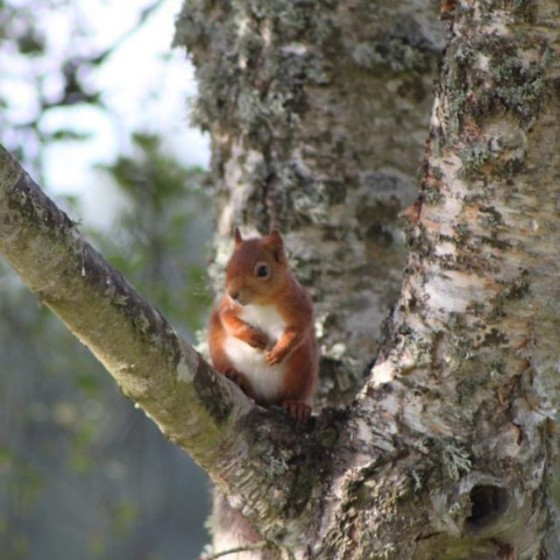 A red squirrel outside our luxury Highland Lodge