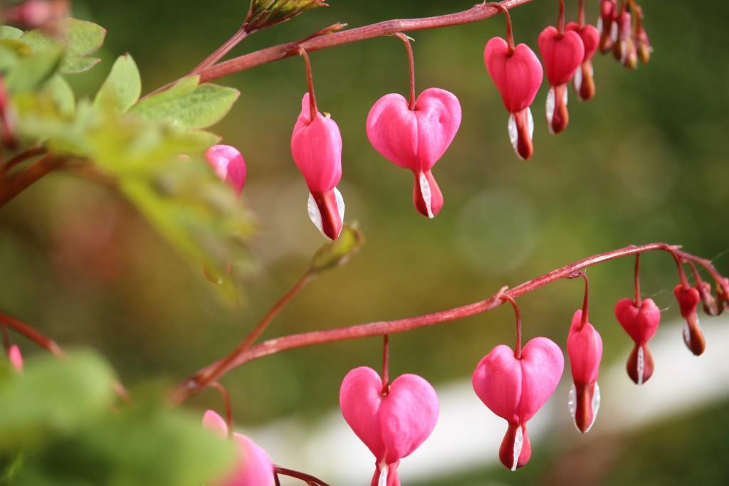Beautiful spring blooms